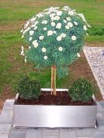 Edelstahl Blumenkasten 35x80cm, H=25cm